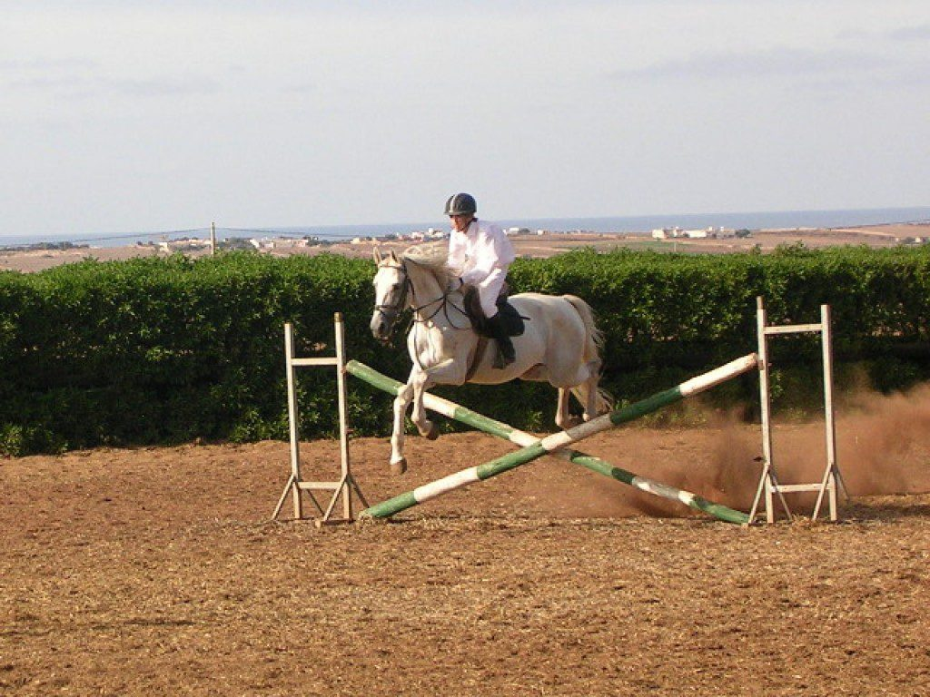 Stage obstacles et gymnastique du cheval
