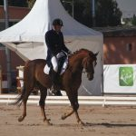 Les Médaillers d'Or SMALL DRESSAGE
